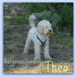 "Sire Theodore (""Theo"")"