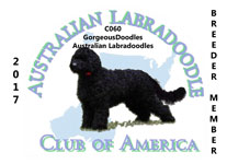 Australian Labradoodle Clue of North America logo