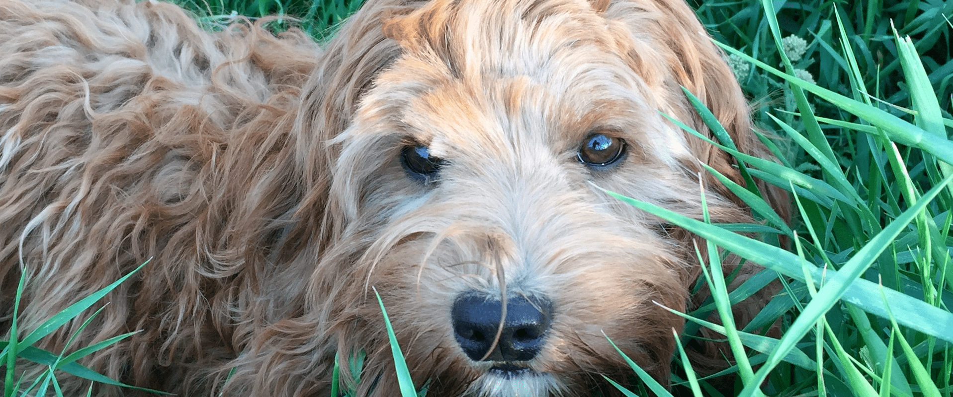The Natural Approach to Flea Control