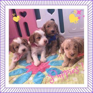 New puppies Cabrini and Theo (Born June 22)