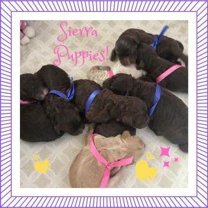 New Puppies Sierra & Vito (Born July 27)