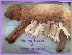 New Puppies Tassie and Reuben (Born August 23rd)