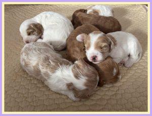 New Puppies Tabby May and Dalton (Born December 28)
