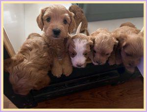 New Puppies Jewel and Dalton (Born January 5, 2021)