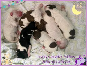 Ester puppies arrived (born July 8, 2021)