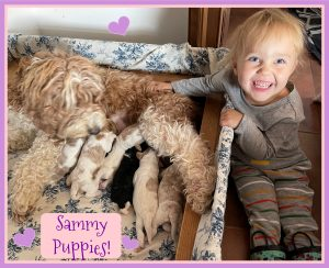 Sammy parti puppies have arrived (Born September 9th 2021)