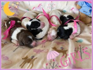 Tabby May Puppies arrived (Born August 25th 2021)