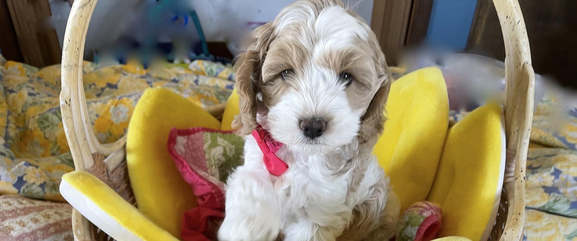 Cabrini had 3 puppies sure wish there were more!