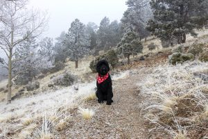 Sheldon is an amazing dog and such a great hiking buddy!
